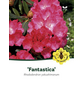 Rhododendron yakushimanum »Fantastica«, rosarot, Höhe: 25 - 30 cm-Thumbnail