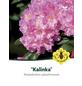 Rhododendron yakushimanum »Kalinka«, rosa/pink, Höhe: 25 - 30 cm-Thumbnail