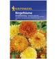 KIEPENKERL Ringelblume, Calendula officinalis, Samen, Blüte: mehrfarbig-Thumbnail
