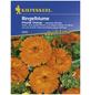 KIEPENKERL Ringelblume, Calendula officinalis, Samen, Blüte: orange-Thumbnail