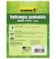 GARTENKRONE Rispenhortensie, Hydrangea paniculata »Vanille Fraise«, creme-Thumbnail