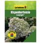 GARTENKRONE Rispenhortensie paniculata Hydrangea »Limelight -R-«-Thumbnail
