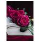 ROSEN TANTAU Rose Rosa x hybrida »Goethe«, Purpurpink-Thumbnail