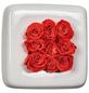 Rosen in Keramik »Infinity-Bloom«,  Chest, weiss/hellrot, BxHxT: 16 x 16 x 9  cm-Thumbnail