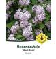 Rosendeutzie, Deutzia hybrida »Mont Rose«, Blütenfarbe rosa-Thumbnail