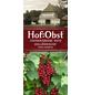 Rote Johannisbeere Ribes rubrum »Rote Holländische«-Thumbnail