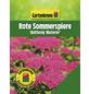 GARTENKRONE Rote Sommerspiere, Spiraea japonica »Anthony Waterer«, rosa/pink, winterhart-Thumbnail