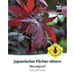 Roter Fächer-Ahorn, Acer palmatum »Bloodgood«, Blütenfarbe purpurfarben-Thumbnail