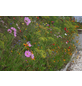 GLAESERGREEN Saatgut »Blumenwiese-Patch«-Thumbnail