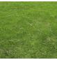 Saatgutmatte »Trockenrasen«, Bio-Qualität-Thumbnail