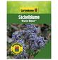 GARTENKRONE Säckelblume, Ceanothus pallidus »Marie Bleue«, Blütenfarbe blau-Thumbnail