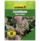 GARTENKRONE Säckelblume, Ceanothus pallidus »Marie Simon«, Blütenfarbe rosa/pink-Thumbnail