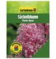 GARTENKRONE Säckelblume, Ceanothus pallidus »Perle Rose«, Blütenfarbe rosa/pink-Thumbnail