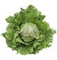 SAATGUT DILLMANN Samen Batavia-Salat Mozart-Thumbnail