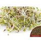 SAATGUT DILLMANN Samen Bio Keimsprossen Alfalfa-Thumbnail