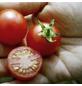 SAATGUT DILLMANN Samen Tomate Cerise rot (Cocktail)-Thumbnail