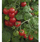 SAATGUT DILLMANN Samen Tomate Siderno, F1 ungebeizt-Thumbnail
