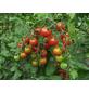 SAATGUT DILLMANN Samen Tomate Supersweet 100, F1 ungebeizt-Thumbnail