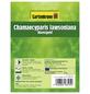 GARTENKRONE Scheinzypresse, Chamaecyparis lawsoniana »Alumigold«, winterhart-Thumbnail