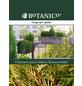 Scheinzypresse Chamaecyparis obtusa »Kamarachiba«-Thumbnail