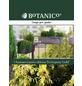 Scheinzypresse obtusa Chamaecyparis »Fernspray Gold«-Thumbnail