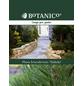 Schlangenhaut-Kiefer leucodermis Pinus »Malinki«-Thumbnail