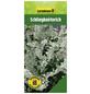 GARTENKRONE Schlingknöterich, Polygonum aubertii, weiß, winterhart-Thumbnail