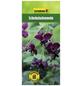 GARTENKRONE Schokoladenwein, Akebia quinata, Blüten: rosa-Thumbnail