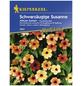 KIEPENKERL Schwarzäugige Susanne, Thunbergia alata, Samen, Blüte: mehrfarbig-Thumbnail