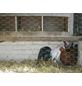 MR. GARDENER Sechseckgeflecht, HxL: 100 x 2500 cm, silberfarben-Thumbnail