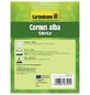 GARTENKRONE Sibirischer Hartriegel , Cornus alba »Sibirica«, weiß, winterhart-Thumbnail