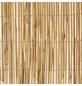 WINDHAGER Sichtschutzmatte, Schilfrohr, LxH: 600 x 160 cm-Thumbnail