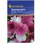 KIEPENKERL Sommermalve, Malope trifida, Samen, Blüte: mehrfarbig-Thumbnail