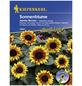 KIEPENKERL Sonnenblume, Helianthus annuus, Samen, Blüte: mehrfarbig-Thumbnail