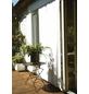 FLORACORD Sonnensegel, rechteckig, Format: 330 x 200 cm-Thumbnail