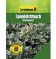 GARTENKRONE Spindelstrauch, Euonymus fortunei »Harlequin«, winterhart-Thumbnail