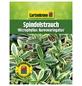 GARTENKRONE Spindelstrauch Euonymus japonicus »Microphyllus Aureo«-Thumbnail