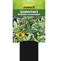 GARTENKRONE Spindelstrauch, Euonymus japonicus »Microphyllus Aureo«, weiß, winterhart-Thumbnail