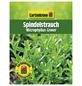 GARTENKRONE Spindelstrauch Euonymus japonicus »Microphyllus Green«-Thumbnail