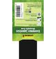 GARTENKRONE Spindelstrauch, Euonymus japonicus »Microphyllus Green«, weiß, winterhart-Thumbnail