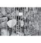 BELLISSA Spiralgabione, BxHxL: 50 x 50 x 50 cm, Stahl-Thumbnail