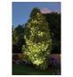 PAULMANN Spotstrahler »Plug & Shine CONE«, 6,8 W, dimmbar-Thumbnail