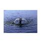 OASE Springbrunnenpumpen »Aquarius Fountain«, 11 W, Fördermenge: 1000 l/h-Thumbnail