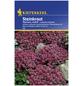 KIEPENKERL Steinkraut, Lobularia maritima, Samen, Blüte: lila-Thumbnail