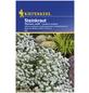 KIEPENKERL Steinkraut, Lobularia maritima, Samen, Blüte: weiß-Thumbnail