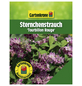 GARTENKRONE Sternchenstrauch, Deutzia magnifica »Tourbillon Rouge«, rosa/pink, winterhart-Thumbnail