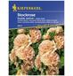 KIEPENKERL Stockmalve, Alcea rosea, Samen, Blüte: apricot-Thumbnail