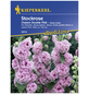 KIEPENKERL Stockrose, Alcea rosea rosea, Samen, Blüte: rosa-Thumbnail