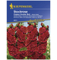 KIEPENKERL Stockrose, Alcea rosea, Samen, Blüte: rot-Thumbnail