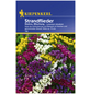 KIEPENKERL Strandflieder, Limonium sinuatum, Samen, Blüte: mehrfarbig-Thumbnail